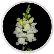 White And Yellow Snapdragon Round Beach Towel
