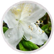 White Azalea Flower 9 Azaleas Raindrops Spring Art Prints Baslee Troutman Round Beach Towel