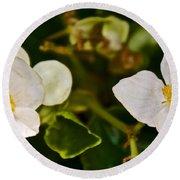 White Begonias At Pilgrim Place In Claremont-california Round Beach Towel
