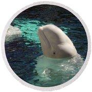 White Beluga Whale 1 Round Beach Towel