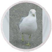 White Bird Of Alberta Round Beach Towel