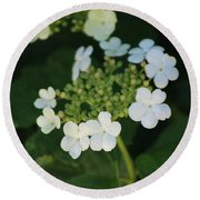 White Bridal Wreath Flowers Round Beach Towel