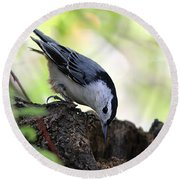 White-breasted Nuthatch Round Beach Towel