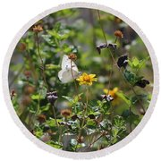 White Butterfly On Golden Daisy Round Beach Towel