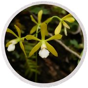 White Butterfly Orchid Round Beach Towel