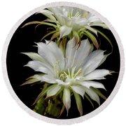 White Cactus Flowers Round Beach Towel