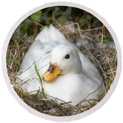 White Call Duck Sitting On Eggs In Her Nest Round Beach Towel
