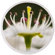White Cherry Blossom Against Green Round Beach Towel