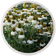White Coneflower Field Round Beach Towel