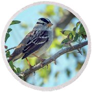 White-crowned Sparrow 0033-111017-1cr Round Beach Towel