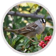 White Crowned Sparrow 1 Round Beach Towel