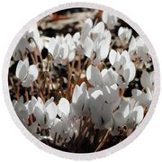 White Cyclamen Round Beach Towel