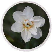 White Daffodils Round Beach Towel