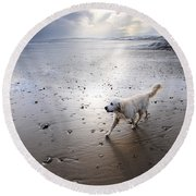 White Dog Round Beach Towel