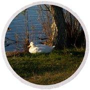 White Duck Resting Round Beach Towel