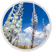White Flowering Sea Squill On A Blue Sky Round Beach Towel