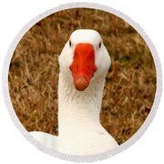 White Goose Close Up 1 Round Beach Towel