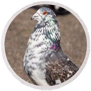 White-gray Pigeon Profile Round Beach Towel