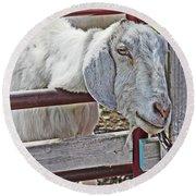 White/grey Goat Head Through Fence 2 6242018 Goat 2420.jpg Round Beach Towel