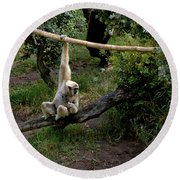 White Handed Gibbon 1 Round Beach Towel