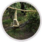 White Handed Gibbon 2 Round Beach Towel