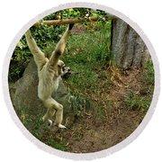 White Handed Gibbon 3 Round Beach Towel