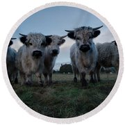 White High Park Cow Herd Round Beach Towel