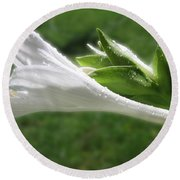 White Hosta Flower 46 Round Beach Towel