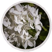 White Hydrangea Bloom Round Beach Towel