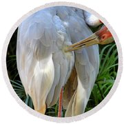 White Ibis At The Zoo Round Beach Towel