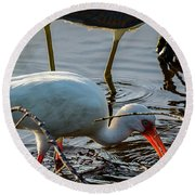 White Ibis Eating Round Beach Towel