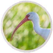 White Ibis Portrait Round Beach Towel