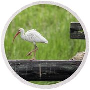 White Ibis Stepping Out Round Beach Towel