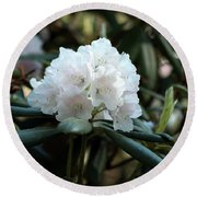 White Inflorence Of  Rhododendron Plant Round Beach Towel