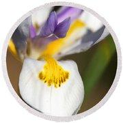 White Iris One Round Beach Towel