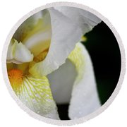White Iris Study No 3 Round Beach Towel