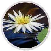 White Lily On Pond Round Beach Towel