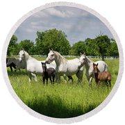 White Lipizzaner Mares Horse Breed With Dark Foals Grazing In A  Round Beach Towel