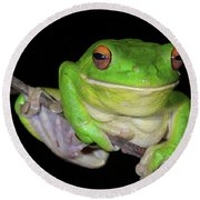 White-lipped Tree Frog Round Beach Towel