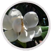White Magnolia Flower 01 Round Beach Towel