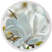 White Magnolia Tree Flower Art Prints Magnolias Baslee Troutman Round Beach Towel