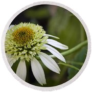 White Milkshake Coneflower Round Beach Towel
