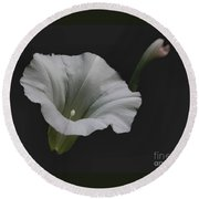 White Morning Glory Round Beach Towel
