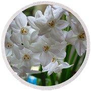 White Narcissi Spring Flower 2 Round Beach Towel