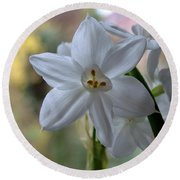 White Narcissi Spring Flowers 3 Round Beach Towel