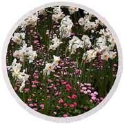White Narcissus With Pink English Daisies In A Spring Garden Round Beach Towel
