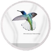White Necked Jacobin Trinidad Round Beach Towel