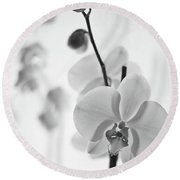 White Orchid On White Bw Round Beach Towel