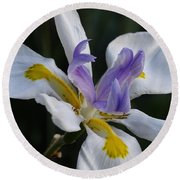 White Orchid With Yellow And Purple Round Beach Towel