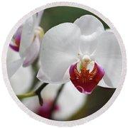 White Orchids 2 Round Beach Towel